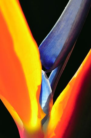 abstract-bird-paradise-encinitas, gottlieb, bob, photo.jpg