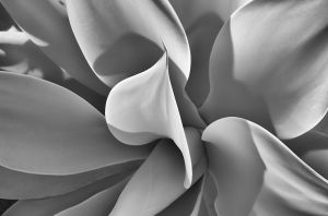 botanical-infrared-gottlieb-photography.jpg