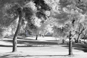 infrared-park-gottlieb-photo-workshop.jpg