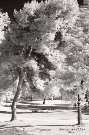 infrared-pines-landscape-gottlieb-photo.jpg