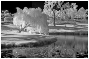 infrared-scenic-trees-pond-e.jpg